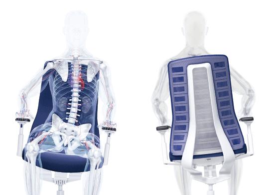 ergonomie-skelett-2